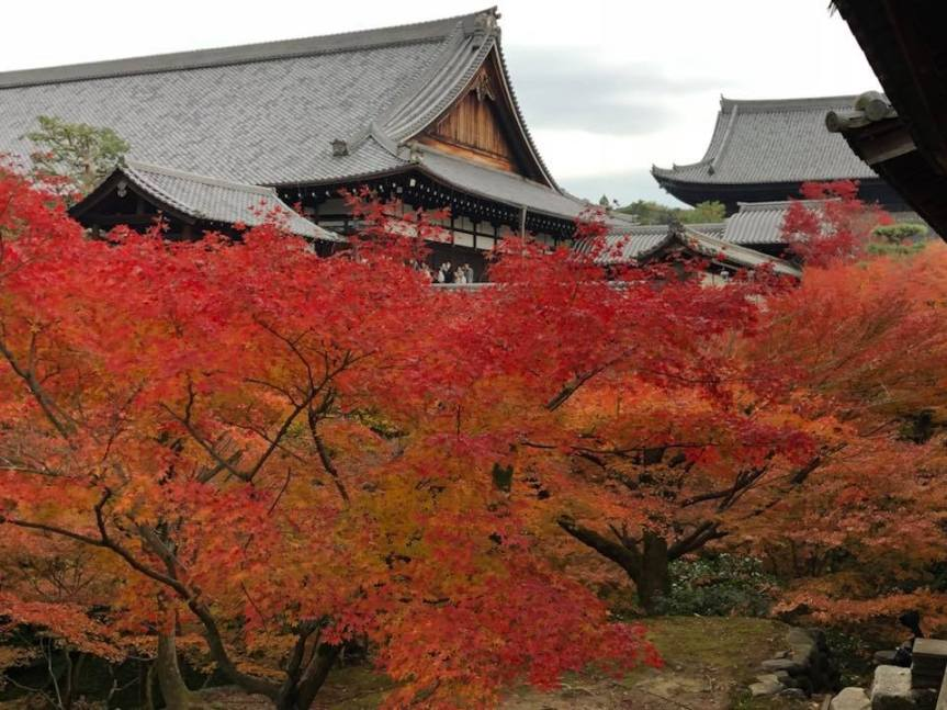 Foliage Season in Kyoto – Day 1