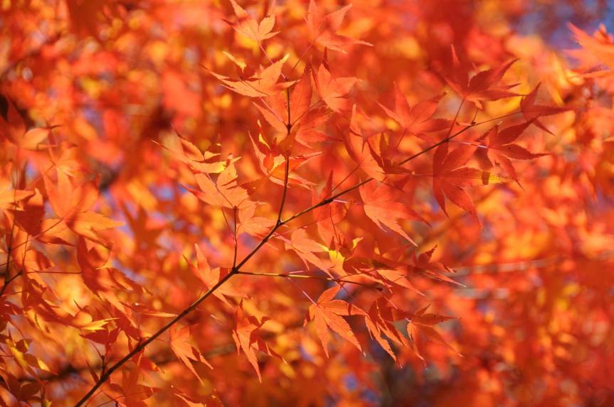 Foliage Season inJapan