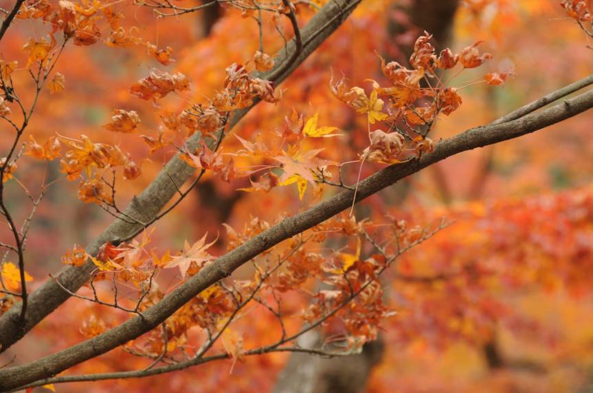 Foliage Season in Kyoto – Day5